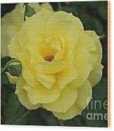 Yellow Wonder Rose...   # Wood Print