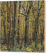 Yellow Woods On A Rainy Day Wood Print