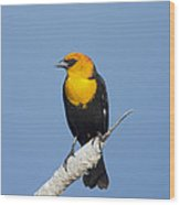Yellowheaded Blackbird Wood Print