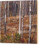 Yellowstone Aspens Wood Print