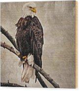 Yellowstone Bald Eagle Wood Print