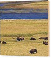 Yellowstone Bison Herd Wood Print