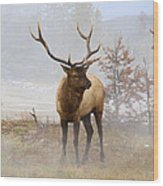 Yellowstone Bull Elk Wood Print