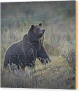 Yellowstone Grizzly On The Lookout Wood Print