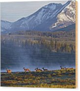 Yellowstone Morning Wood Print