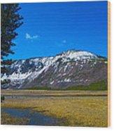Yellowstone National Park Wood Print