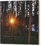 Yellowstone - Sunset Through The Trees Wood Print