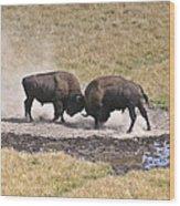 Yellowstone Turf War Wood Print