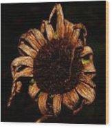 Yesterday's Blackeye Susan Wood Print