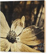Yesterday's Flower Wood Print