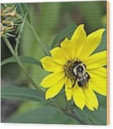 Yet Another Bee On A Flower ... A Yellow Flower This Time Wood Print