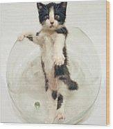 Yin Yang Kitten Wood Print