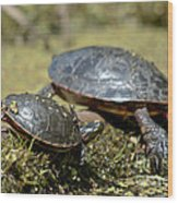 Yoga Turtles Wood Print