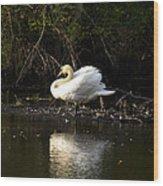 Yogi Swan Wood Print