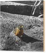 Young Bird Exploring Wood Print