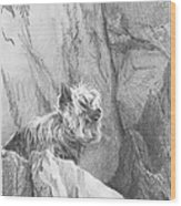 Yorkie Dog On A Cliff Pencil Portrait Wood Print