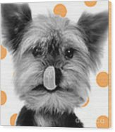 Yorkshire Terrier Dog Wood Print