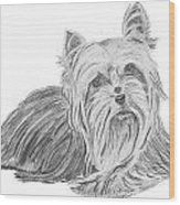 Yorkshire Terrier Drawing Wood Print by Catherine Roberts