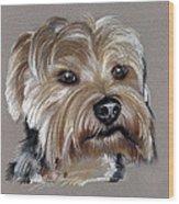 Yorkshire Terrier- Drawing Wood Print