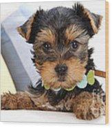 Yorkshire Terrier Puppy Wood Print