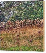 Yorktown Onion Field Wood Print