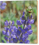 Yosemite Lupine And Ladybug Wood Print