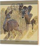 Yosemite National Park - Deer Wood Print