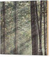 Yosemite Pines In Sunlight Wood Print