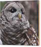 You Can Call Me Owl Wood Print