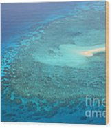 You Found Me Great Barrier Reef Australia  Wood Print