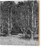 Young Baobab Trees  Wood Print
