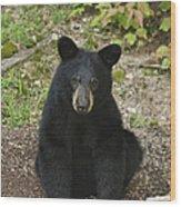 Young Bear 1 Wood Print