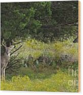 Young Bucks In The Texas Hill Country Wood Print