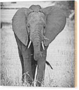 Young Bull Elephant Wood Print