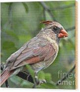 Young Cardinal Wood Print