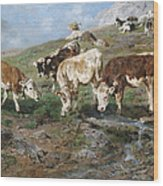 Young Cattle In Tyrol Wood Print