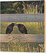 Young Common Ravens Wood Print