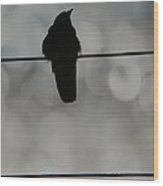 Monochrome Young Crow Wood Print