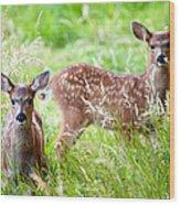 Young Deer Wood Print