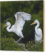 Young Egret Spreading His Wings Wood Print