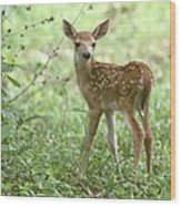 Young Fawn In The Woods Wood Print
