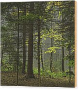 Young Forest Wood Print