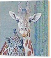 Young Giraffes Wood Print