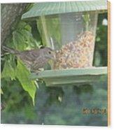 Young Gray Bird Wood Print