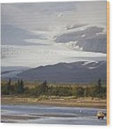Young Grizzly Fishing At Hallo Bay Wood Print