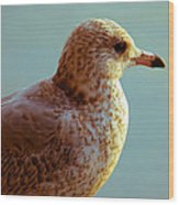 Young Gull Wood Print