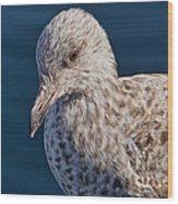 Young Herring Gull Wood Print