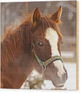 Young Horse In Winter Day Wood Print
