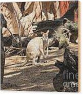Young Kangaroo Wood Print