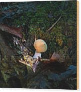 Young Lonely Mushroom 2 Wood Print